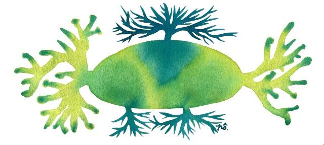 île algue bleu-vert