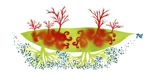 île causse verouge rizôm