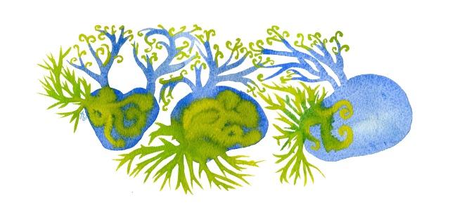 île patates germées