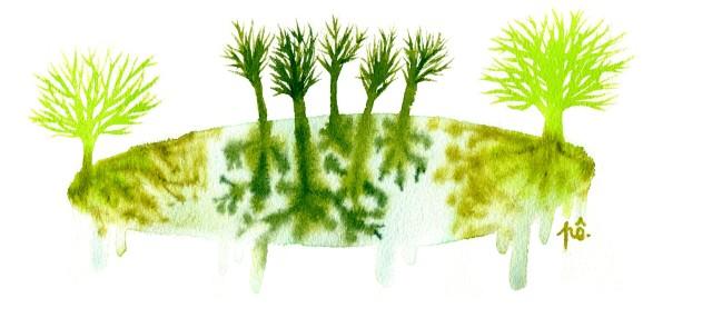 île vert racines encrées net